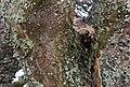Tarangire 2012 05 28 1765 (7468564430).jpg