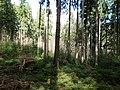 Taunus forest near Urselbach.jpg