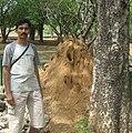TermiteMOUNDbig-Tamilnadu17.3.JPG