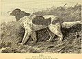 The American kennel and sporting field (1883) (17535088033).jpg