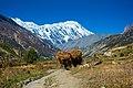 The Annapurna.jpg