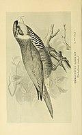 The Avicultural magazine (1896) (20343323372).jpg
