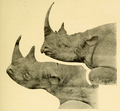 The Big Game of Africa (1910) - Black & White Rhinos.png