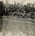 The Putumayo - the devil's paradise, travels in the Peruvian Amazon Region and an account of the atrocities committed upon the Indians therein (1913) (14802071963).jpg