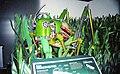 The Robot Zoo Grasshopper.jpg