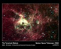 The Tarantula Nebula.jpg