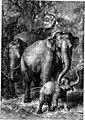 The animals of the world. Brehm's life of animals; (1895) (20151603514).jpg