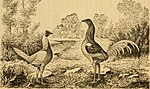 The book of the bantams - a brief treatise upon the mating, rearing and management of the different varieties of bantams (1886) (20369720566).jpg