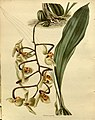 The botanical cabinet (No 1645) (8613678476).jpg