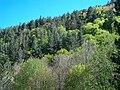 Tipica vegetazione silana.jpg