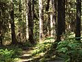 Tongass National Forest 534.jpg