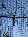 Toronto Zoo IMG 1104 (194431829).jpg