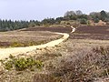 Track from Hasley Inclosure to Sloden Inclosure, New Forest - geograph.org.uk - 157293.jpg