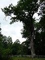 Trajerův mlýn - památný stom.jpg