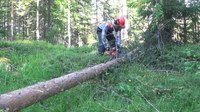 File:Tree Felling IV- Cutting the Trunk.webm