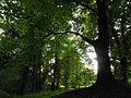 Tree in Bäketal Kleinmachnow 2014.JPG