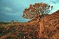 Tree in Perspective.JPG