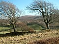 Trees and ancient walling, Cloutsham Gate - geograph.org.uk - 415236.jpg