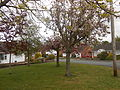 Trees in The Priory, Neston.JPG