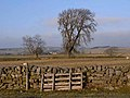 Trees in winter, near Housty - geograph.org.uk - 1098643.jpg