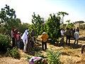 Trees planted on Arborloo pit (5566872297).jpg