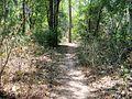 Trekking @ Wayanad wildlife Sanctuary - panoramio (3).jpg