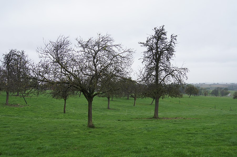 Blegny (Trembleur),  Belgium: Orchard in the valley of the bolland River between Feneur and Trembleur