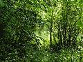 Tribsees Alter Friedhof Baudenkmal 2014-05-25 222.JPG
