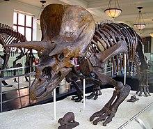 gambar dinosaurus