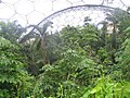 Tropical forest canopy at Eden - geograph.org.uk - 821766.jpg