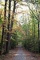 Tunnel of leaves (6275794183) (2).jpg