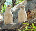 Two white birds WA.JPG