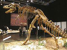 Tyrannosaurus scelett.jpg