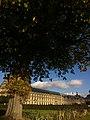 Un arbre, Tuileries (10653891543).jpg