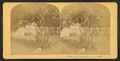 Under the orange trees, Florida, from Robert N. Dennis collection of stereoscopic views 3.png