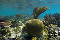 Underwater corals on the Island of Culebra.jpg