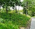 Urban Greenery - geograph.org.uk - 1337534.jpg