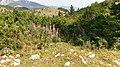 Velika planina (40105155220).jpg