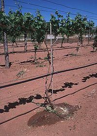 trang trại cây ăn trái