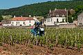 Vineyards near Gevrey-Chambertin (7309858246).jpg