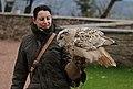 Vogelflugschau im Schloß Augustusburg. 2H1A8604WI.jpg