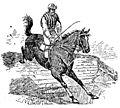 Volpini - 516 proverbi sul cavallo (page 1 crop).jpg