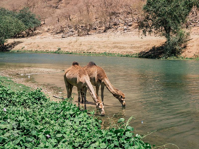 Wadi Dirbat 2.jpg