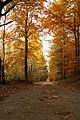 Waldspaziergang 2011-11-01-4112.jpg