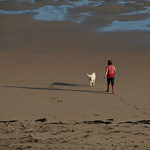 English: Walking the Dog Walking the dog on Su...