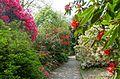 Walkway - Trengwainton Garden - Cornwall, England - DSC02558.jpg