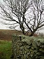 Wall above Lord Ling - geograph.org.uk - 346334.jpg