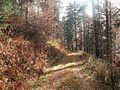 Wanderung im November - panoramio (43).jpg