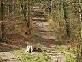 Wanderweg - panoramio (113).jpg