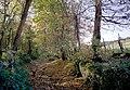 Wannock Glen - geograph.org.uk - 47197.jpg